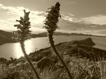Paysages de l'île du Soleil, Titicaca